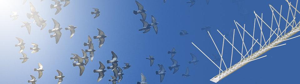 Гребени против птици