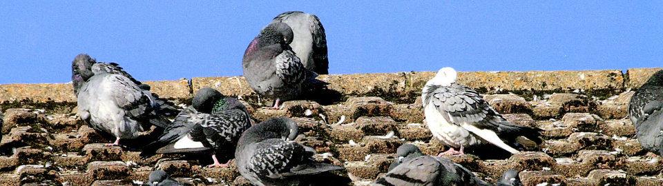 Защита на сгради и съоръжения от птици
